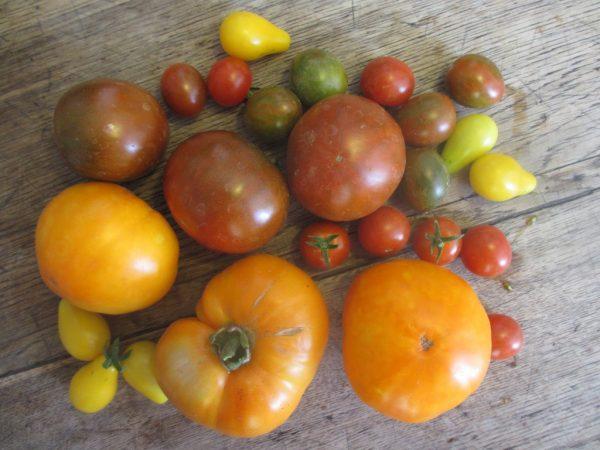 Koken in de Haute Provence: tian provençal - tomaten